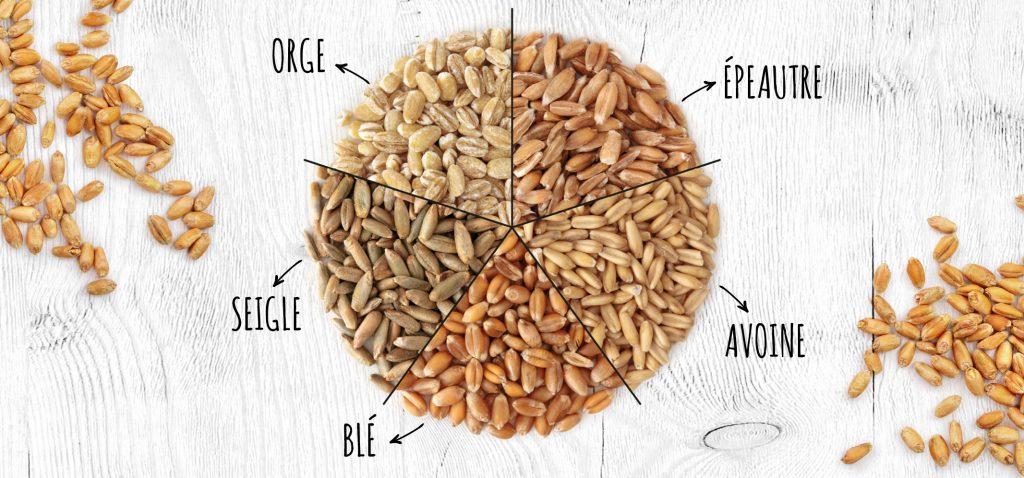 Le blé, l'épautre, le seigle, et l'orge, ainsi que l'avoine contiennent du gluten