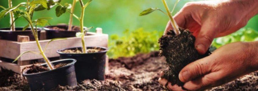Du champ à l'assiette, bien cultiver pour bien manger